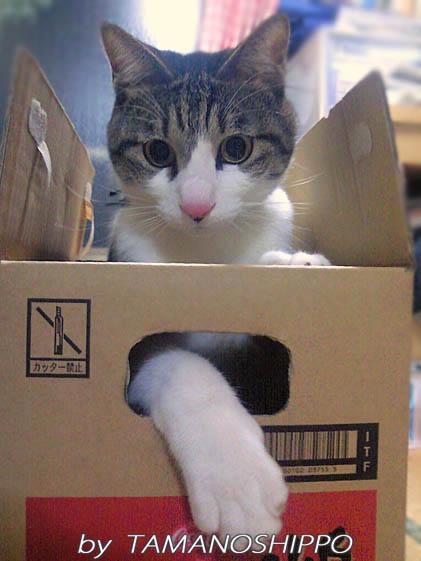 満足げな猫