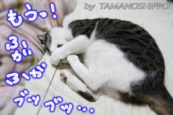 おもちゃで遊ぶネコ