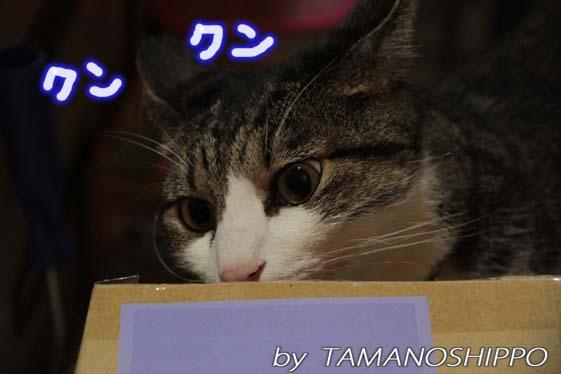 荷物をクンクンする猫