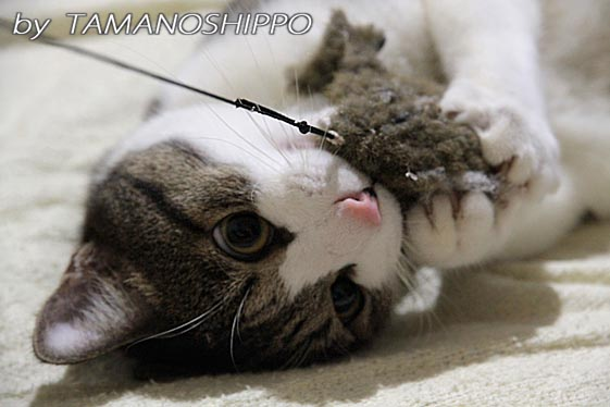 ハッスル猫