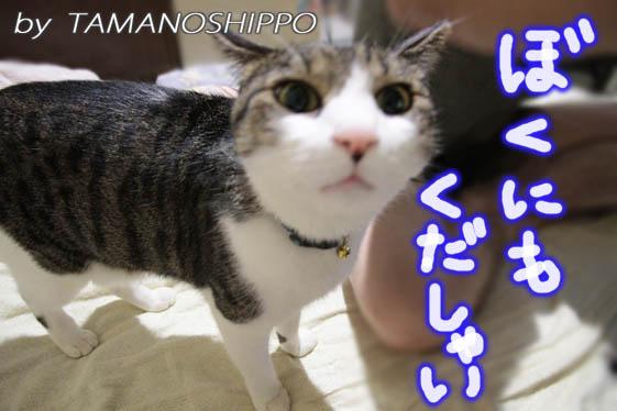 食べ物をねだる猫