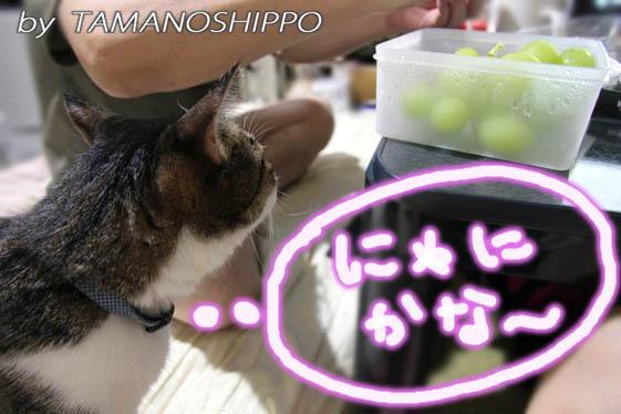 食べ物を確認する猫