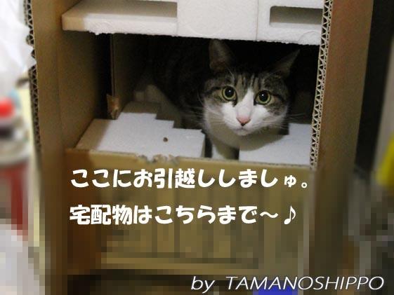 猫の好きな家