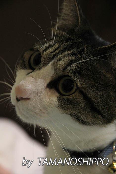虫さんを見つめる猫