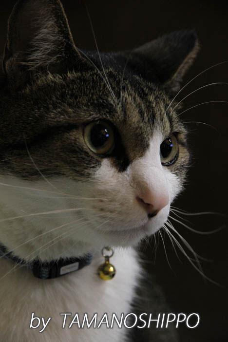 猫のお見合い写真