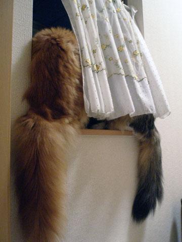 窓辺のにゃんず