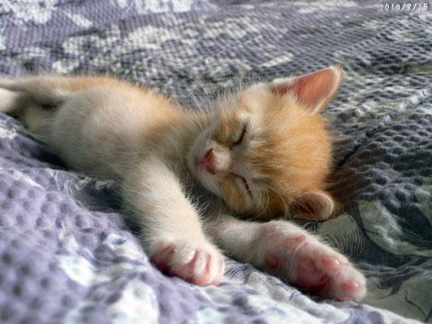 寝るマンゴー