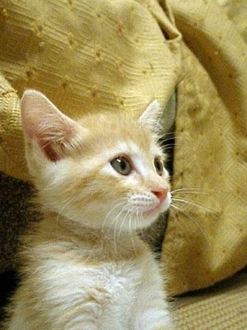 猫らしくなったマンゴー-1