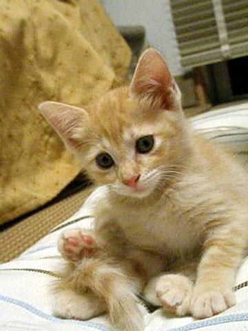猫らしくなったマンゴー-2