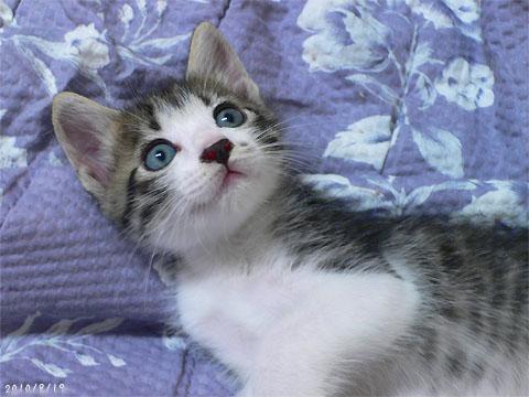 青い目のショコラ