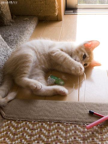 おまけ・遊ぶマンゴー