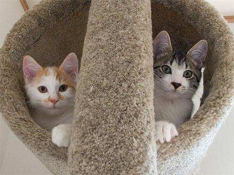 にゃんず in 猫タワー