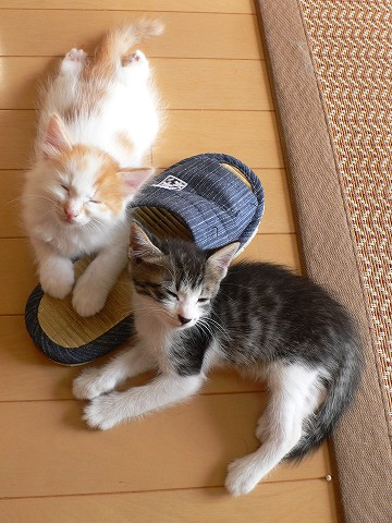 スリッパ仔猫