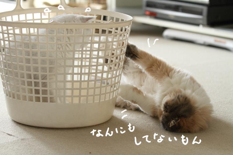 2011_08_26_6401.jpg