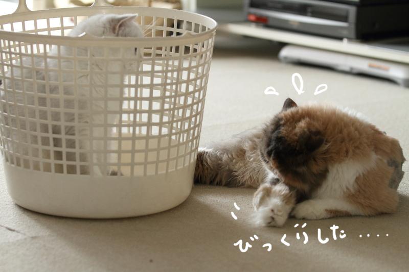 2011_08_26_6409.jpg