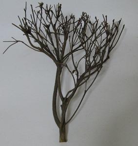brachio5.jpg