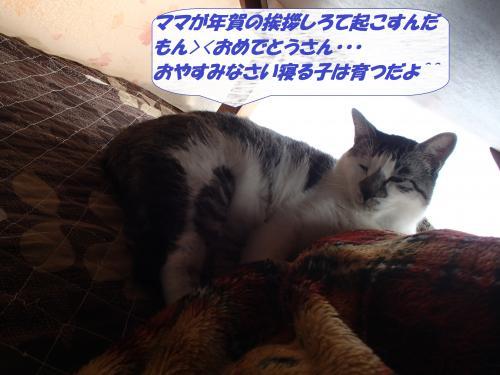 P1016388_convert_20140102064113.jpg