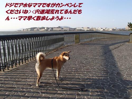P1016392_convert_20140102064216.jpg
