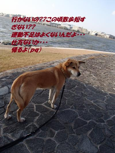P1016394_convert_20140102064346.jpg