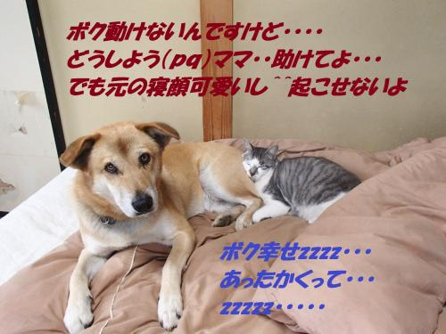 P1046434_convert_20140106065922.jpg