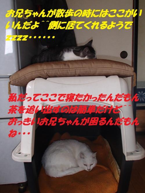 P1046435_convert_20140106065938.jpg