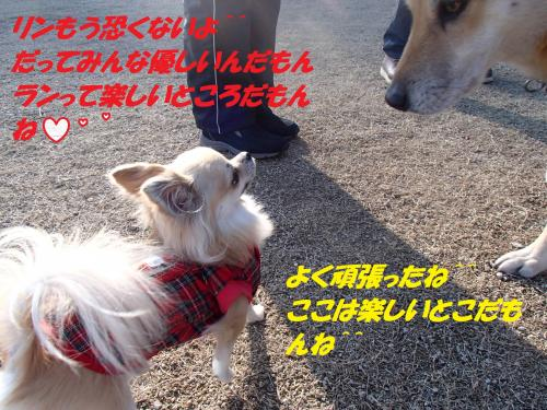 P1050017_convert_20140108074052.jpg