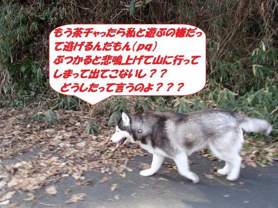 P1070053_convert_20140116074630.jpg