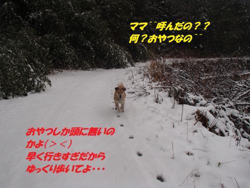 P1090065_convert_20140110075501.jpg