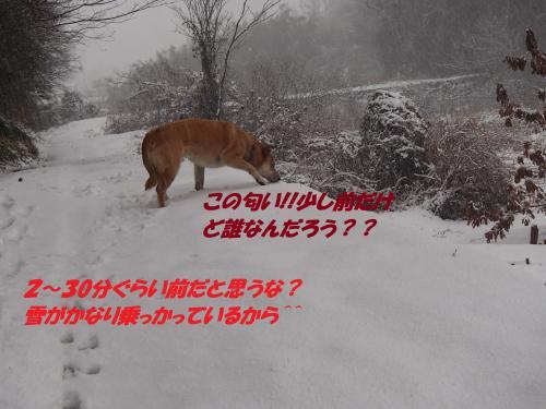 P1090068_convert_20140110075554.jpg