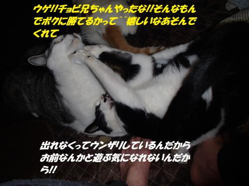 P1100077_convert_20140112062146.jpg