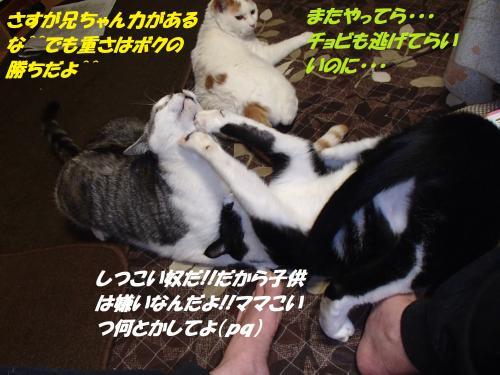 P1100078_convert_20140112062159.jpg
