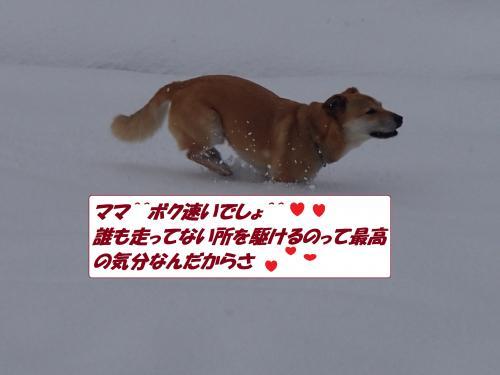 P1100091_convert_20140111071716.jpg