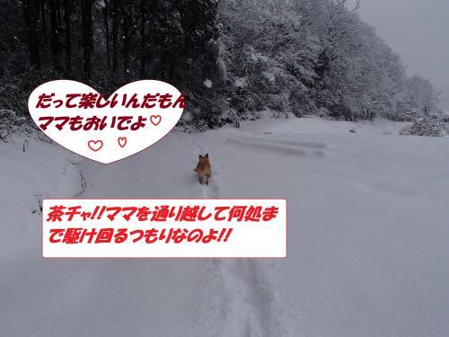 P1100092_convert_20140111071729.jpg