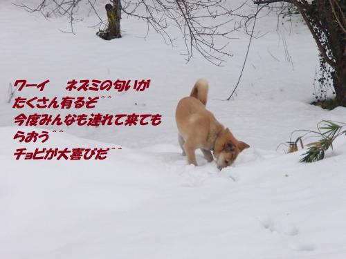 P1120110_convert_20140113074732.jpg
