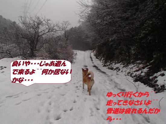 P1130100_convert_20140114081336.jpg
