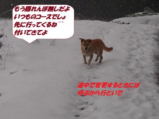 P1130101_convert_20140114081351.jpg