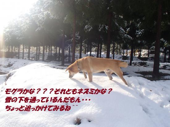 P1140108_convert_20140115074605.jpg