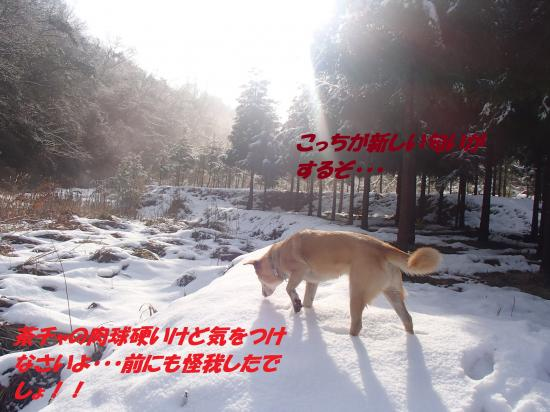 P1140109_convert_20140115074618.jpg