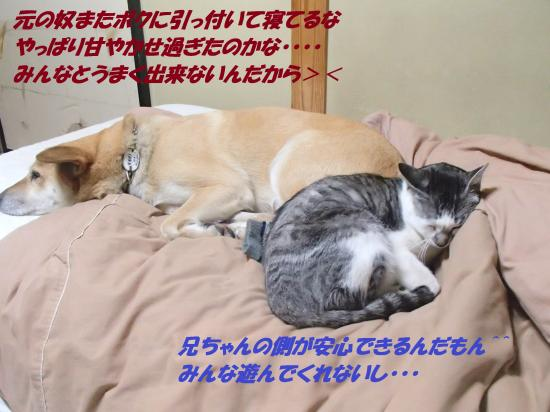 P1150126_convert_20140116074720.jpg