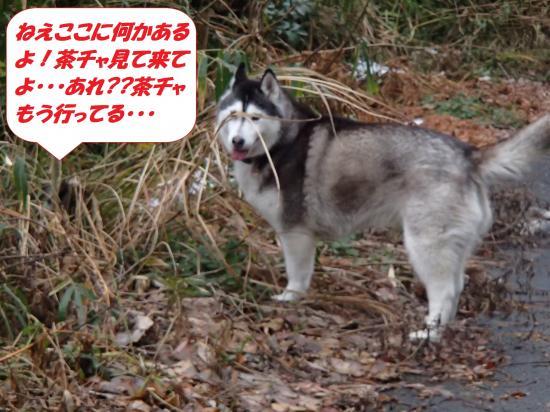 P1160132_convert_20140117080316.jpg