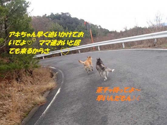 P1160137_convert_20140117080441.jpg