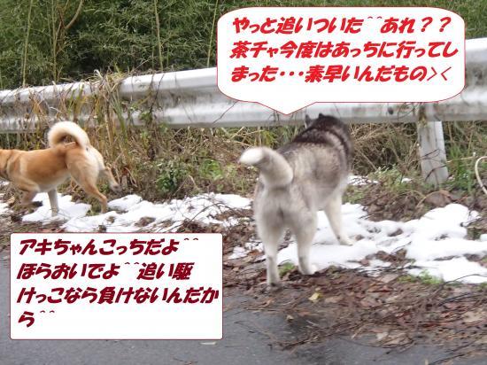 P1160146_convert_20140117080458.jpg