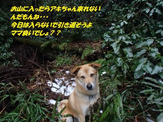 P1160147_convert_20140117080518.jpg