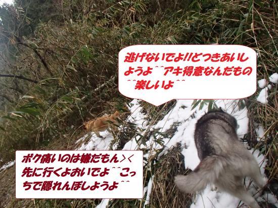 P1160153_convert_20140117080607.jpg