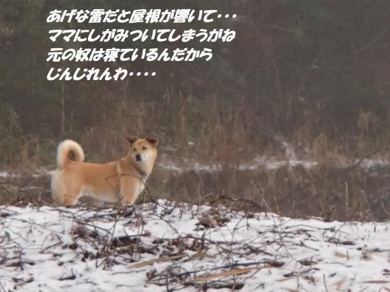 P1180167_convert_20140119071805.jpg