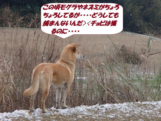 P1190174_convert_20140120075244.jpg