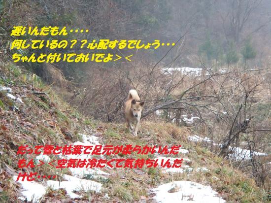 P1200197_convert_20140121074213.jpg