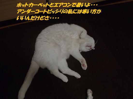 P1200212_convert_20140121074401.jpg