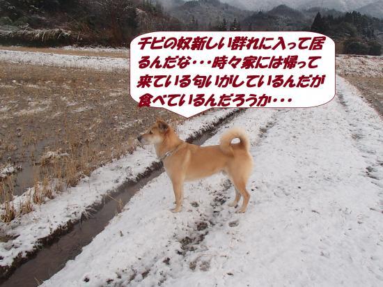 P1210216_convert_20140122080937.jpg