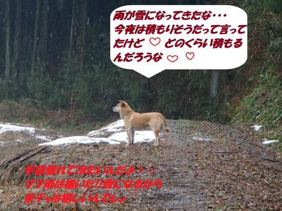 P1210221_convert_20140122081050.jpg